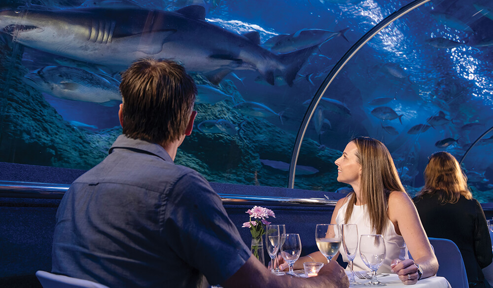 couple dining in AQWA's underwater tunnel with shark over head